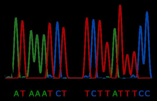 Genética Forense: ADN